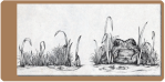 La rana y la mosca, de Josefina Wolf para el libro Pequeñas teorías sobre el comportamiento animal. Andres Sobico y Josefina Wolf. Ed. La Bohemia